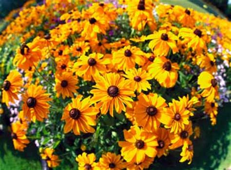 plant types annual perennial annuals and biennials what are they howstuffworks