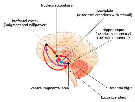 How Habits Are Formed In The Brain by Why Are Habits So Hard To Break 187 Science Abc