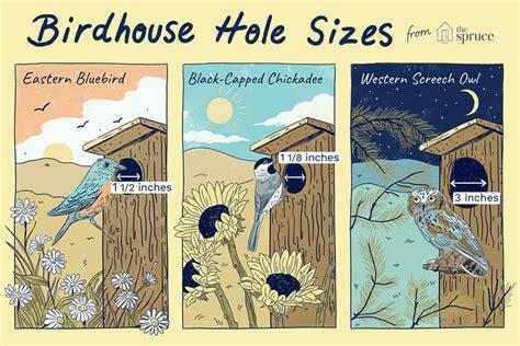 building  birdhouse    size hole bird houses bird houses diy backyard birds