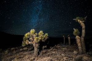 Joshua Tree Grove Death Valley National Park James