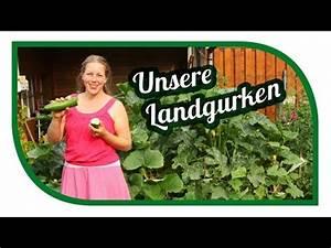 Tomaten Düngen Hausmittel : mehltau vorbeugen bek mpfen und bremsen doovi ~ Whattoseeinmadrid.com Haus und Dekorationen