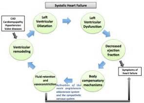 Systolic Congestive Heart Failure Pathophysiology