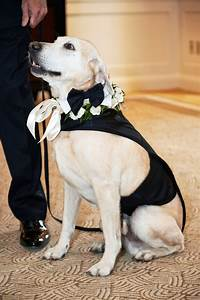 dog ring bearer with outfit