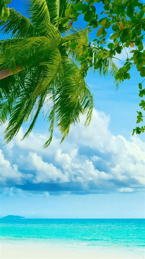Tropical Beach Coconut Tree  Best Htc One Wallpapers