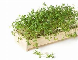 Wie Lange Braucht Rasen Zum Wachsen : wie lange braucht kresse zum wachsen so f rdern sie die entwicklung des k chenkrauts ~ Buech-reservation.com Haus und Dekorationen
