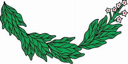 Tobacco Clipart Leaf Plant Transparent Background Clip