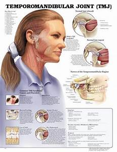 Temporomandibular Joint Anatomy Poster