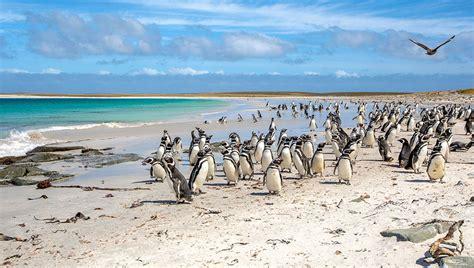 7 Imperdibles en las Islas Falklands/Malvinas Arturo Bullard