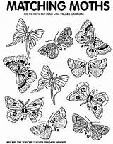 Moth Match Coloring Crayola Moths Matching Printable Crayon Colors Thanksgiving Worksheets Butterfly Adults Preschool Craft sketch template