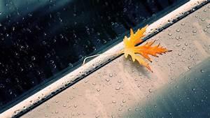 Beautiful Rain Wallpapers – WeNeedFun