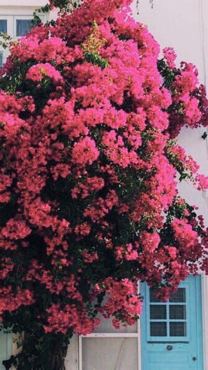 sfondo fiori tumblr