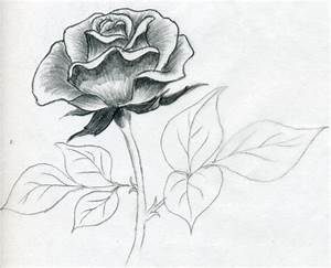 how to draw a rose44 Pencil Drawings Of Flowers And Hearts ...