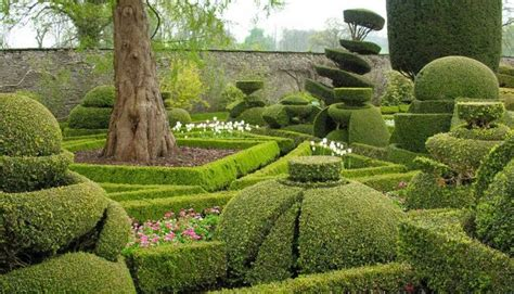 Best Topiary/pruning/training Images On Pinterest