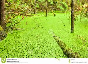 Rainforest Wetland Wildernis Of West Coast BC Stock Images ...