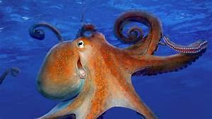 Smiling, Octopus, U2013, Bing, Wallpaper, Download