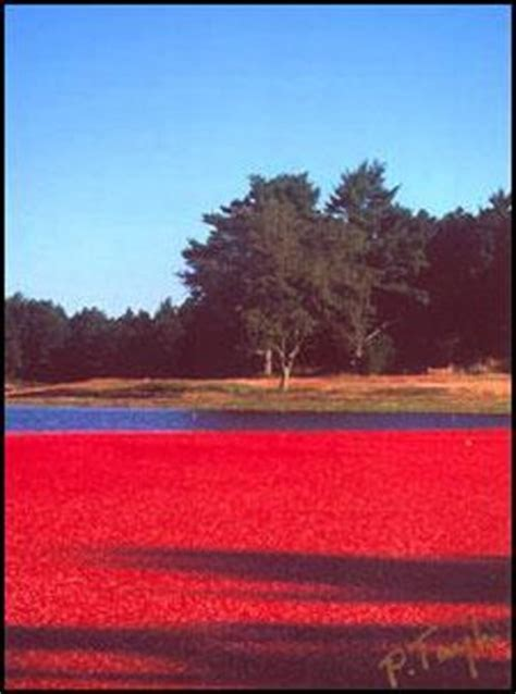 Cranberry Bog Tours (harwich, Ma) Top Tips Before You Go