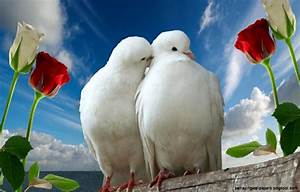 Free Download Images Of Love Birds   Amazing Wallpapers