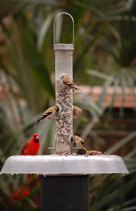 winter birds in the garden tallahassee com community blogs