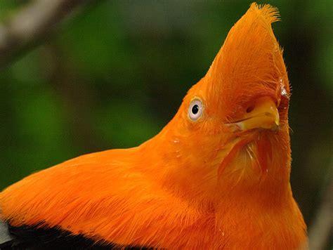 orange bird flickr photo sharing
