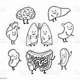 Human Organs Funny Faces Smiling Outlined Descritti Illustrazione Vector Leuke Grappige Menselijke Drawing Abdomen Vettore Heart Dell Digerente Umano Apparato sketch template
