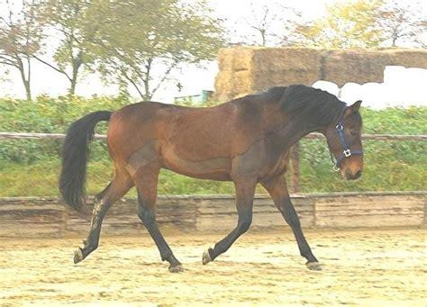 cat dog horse tier pflegesalon pferde