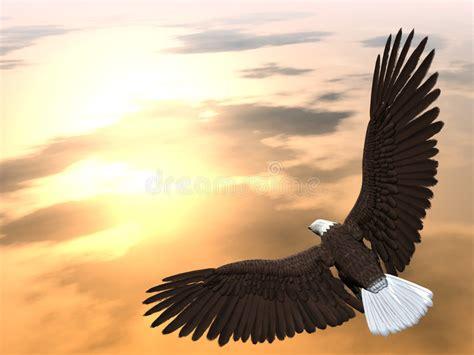 eagle soaring stock illustration illustration  bird