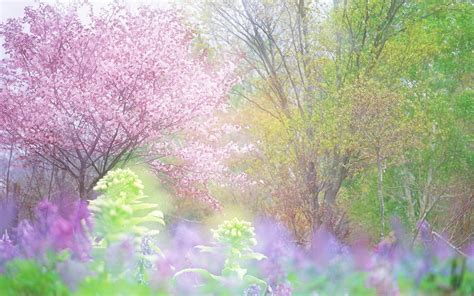 30+ Spring Backgrounds, Wallpapers, Images, Pictures