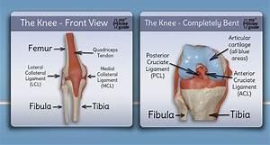 Knee Anatomy Teach Me
