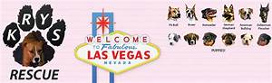 Donate a car in las vegas and help animals center for for Dog pound las vegas nevada