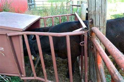 Creep Feeder For Calves