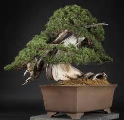 the most expensive bonsai tree bonsai empire