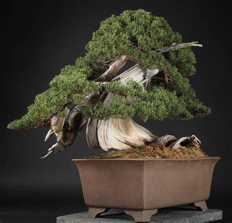 Bonsai Baum Preis by Bonsai Prices Bonsai Empire