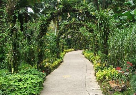 tropica garden tropical garden design ideas native home garden design