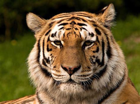 Wildlife conservation Wikipedia