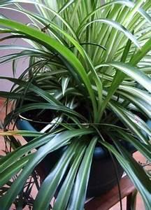 Typische Zimmerpflanzen Die Beliebtesten Zimmerpflanzen