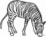 Zebra Coloring Pages Clipart Line Zebras Printable Drawing Clip Super Animal Clker Clipartbest Supercoloring Clipartmag Cliparts Silhouettes sketch template