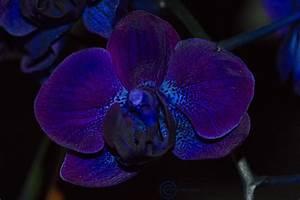 Pin by prado studio on ST Dark Purple Combo | Pinterest ...