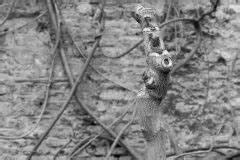 Blauregen Im Kübel : blauregen wann ist die bl tezeit der wisteria ~ Frokenaadalensverden.com Haus und Dekorationen