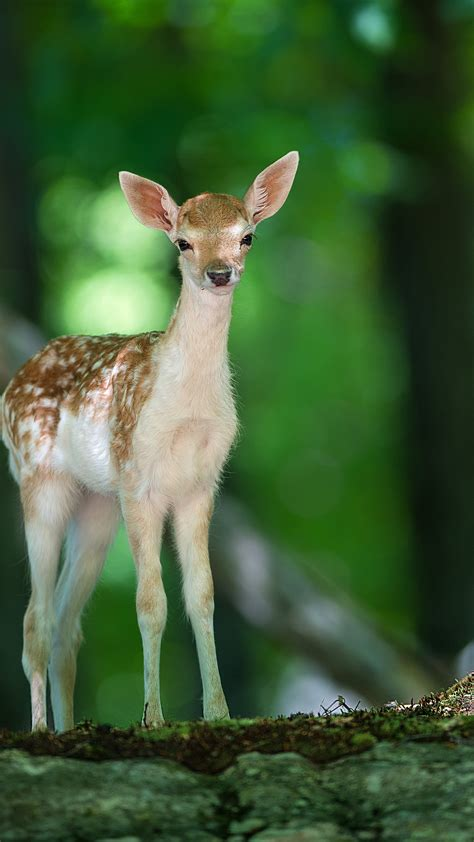 wallpaper deer cute animals forest animals