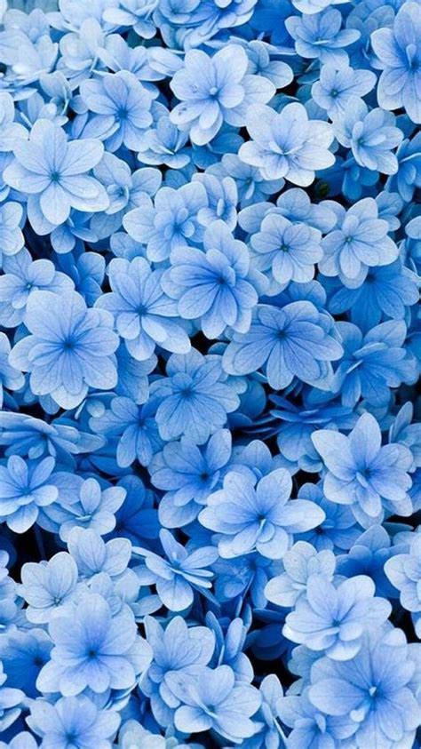 spring wallpaper images   phone  desktop