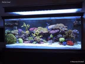 Guida all allestimento di un acquario marino tropicale