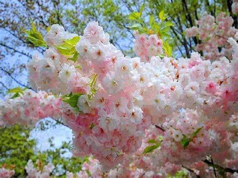 Floare de primavara - Hârtie plantabilă