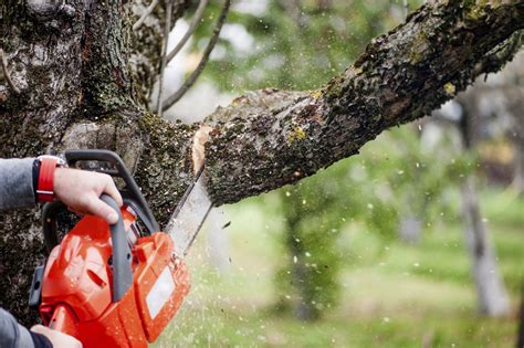 The Wrong Time To Trim Trees
