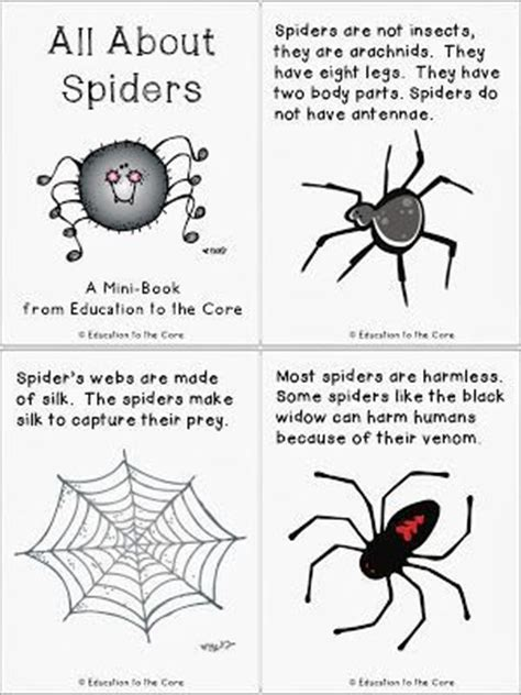 images  spiders unit  pinterest facts