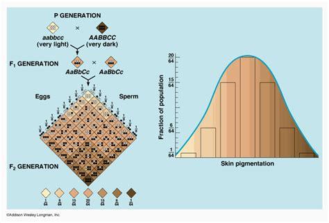 skin color genetics genetics