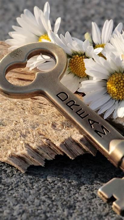 Key Dream Inscription Daisies Iphone 6s Parallax