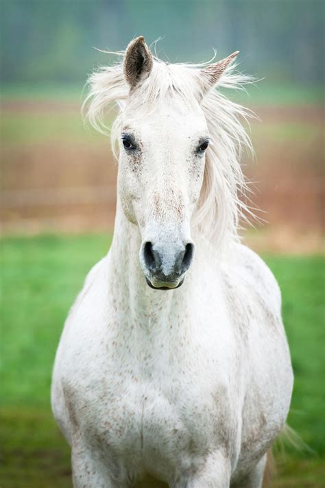 horse training animal camera science looking natural