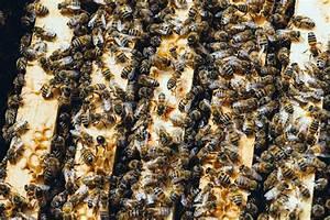 Bienen Vertreiben Essig : 25 selbstversorger f higkeiten die du lernen kannst wenn du noch in der stadt wohnst wurzelwerk ~ Whattoseeinmadrid.com Haus und Dekorationen
