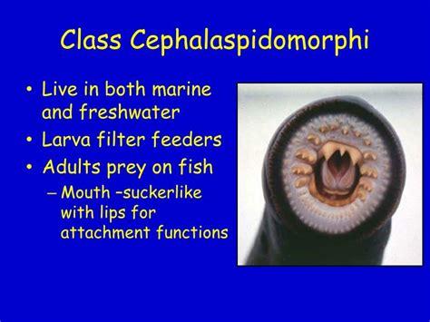 fishes vertebrate success  water powerpoint