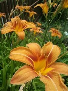 Blumen Im Garten : blumen und bl hende stauden im juli im garten ~ Bigdaddyawards.com Haus und Dekorationen
